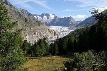 2Der Aletschwald: Seit 1933 ein Schutzgebiet mit einzigartiger Ausstrahlung.